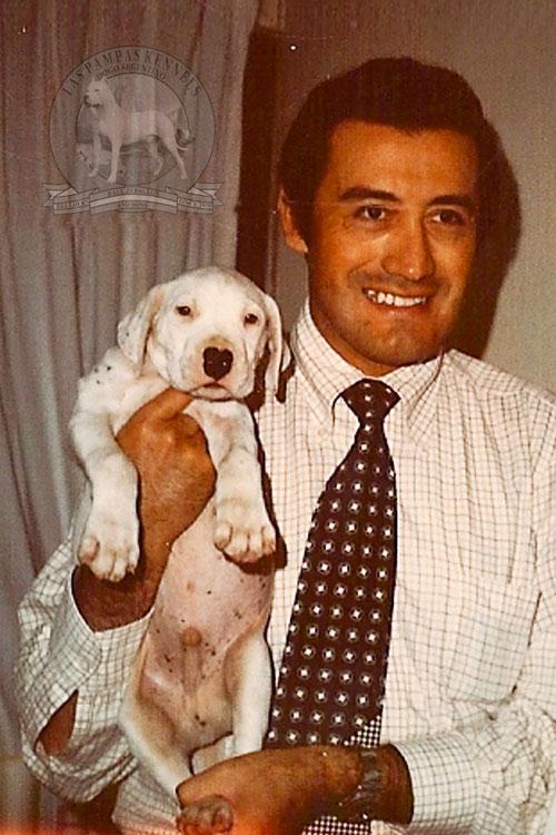Dogo Argentino Argentine The Original Breeder