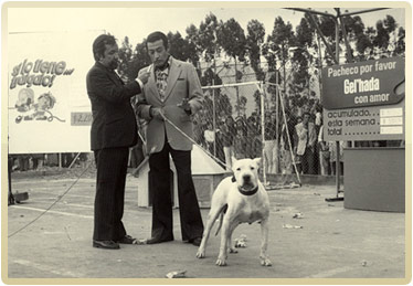 Dogo Argentino - Argentine Dogo : The Original US Breeder