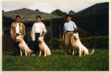 Dogo Argentino - Argentine Dogo : The Original US Breeder